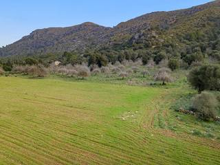 Big plot of land in a peaceful and very beautiful rural area near Alcúdia town