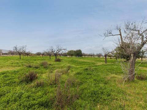 BIN0376 Rustic plot of land, perfect to build a country villa with pool near Binissalem