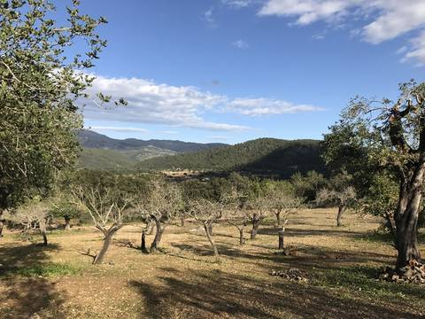 CAM0374 Plot with building project for sale near Campanet with stunning mountain views
