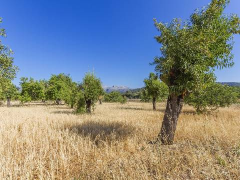 CAM0453 Plot of nearly 30,000 m2 with almond trees in the countryside near Campanet