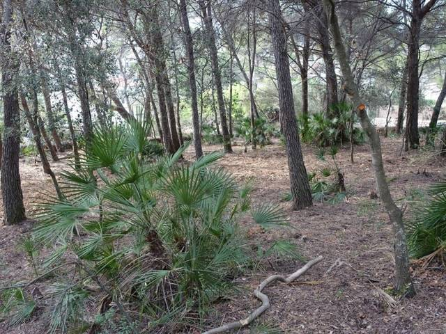 Plot with project near the sea in a quiet area in the north of Mallorca