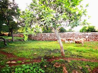 Large building plot for sale in Costitx - Bargain price