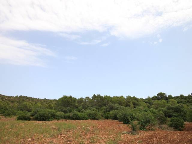 Plot for sale in Pollensa with beautiful views to the mountains