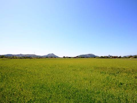 POL0209 A lovely plot of land, no planning permission but can be applied for. Pollença - Alcudia - Mallorca - Balearic Island.