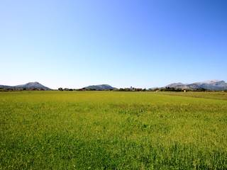 A lovely plot of land, no planning permission but can be applied for. Pollença - Alcudia - Mallorca - Balearic Island.
