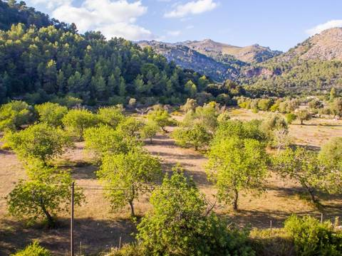 POL0336 Magnificent rustic plot for sale in Pollensa with stunning views to the mountains