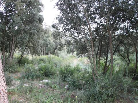 POL0442 Good sized plot providing good opportunity for investment in Crestatx, Pollensa