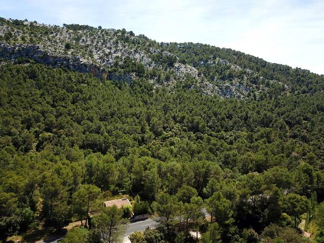 Fantastic rustic plot of large dimensions and building licence in Pollensa