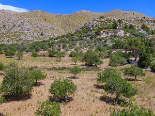 Country plot with building permission, close to Puerto Pollensa