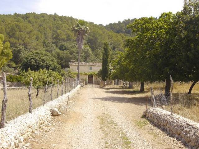 Mallorcan finca with huge plot and permission to run an agroturismo in Campanet