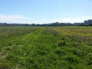 Extensive building plot with approved project for sale near Sencelles