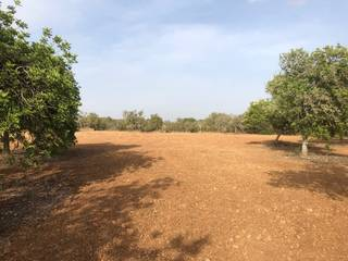 Country plot with plans for an amazing 4 bedroom villa with pool in Algaida
