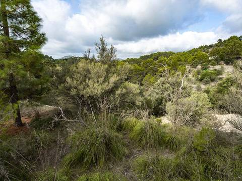 SWOGAL0208 Building plot in the picturesque surroundings of southwest of Mallorca